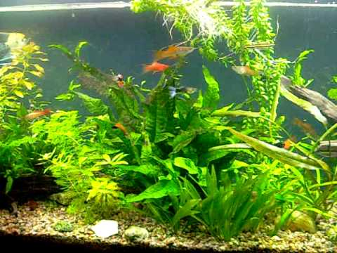 Acuario peces tropicales youtube for Peces tropicales