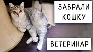 Забрали Кошку в Квартиру Осмотр Ветеринара Петербург 2020