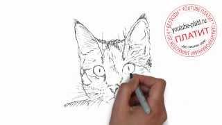 Нарисованные карандашом кошки  Как легко нарисовать красивую мордочку кошки поэтапно за 25 секунд