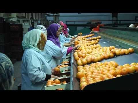 Дневники марокканских мандаринов