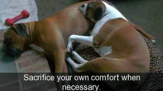 Adopt A Boxer Rescue Presents Lessons From Our Rescues