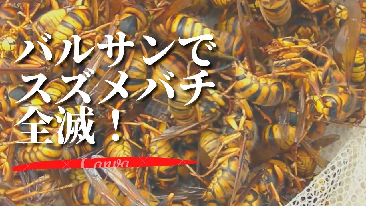 スズメバチをバルサンで全滅させてみた!栗東市でキイロスズメバチ駆除 Defeated the Murder Hornets at a Japanese house