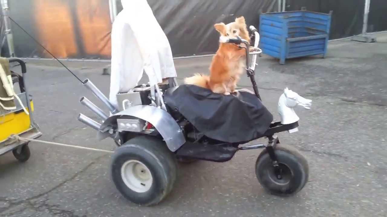 le petit chien sprite qui conduit une moto a 3 roues et sa. Black Bedroom Furniture Sets. Home Design Ideas