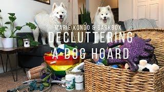Decluttering Samoyed Toys! | BarkBox Unboxing and Dog Supply Purge #SustainableSummer