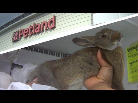 Petition: Urge Petland to Stop Selling Bunnies, Kittens, and
