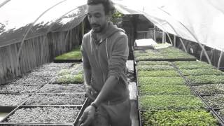 Microgreens and Microherbs: the Backbone of Harpke Family Farm