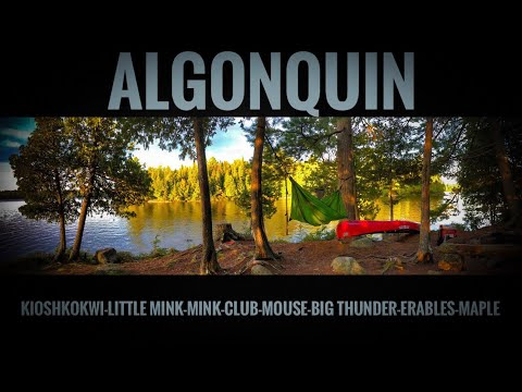 ALGONQUIN Kioshkokwi-Little Mink-Mink-Club-Mouse-Big Thunder-Erables-Maple