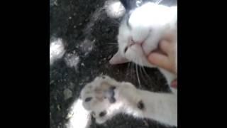 Мягкий живот и острые зубы кота Диего