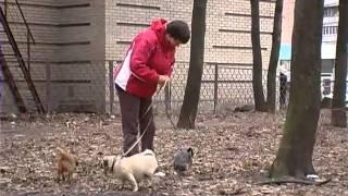 """Собаки """"в положении"""": советы по уходу . Все О Домашних Животных."""