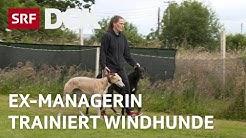 Windhunde-Trainerin in Irland | Schweizerin findet Glück auf der Hunderennbahn | Reportage | SRF DOK