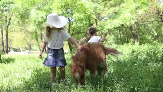 Детская фотосессия с жеребятами пони. Севастополь(, 2015-05-21T13:13:54.000Z)