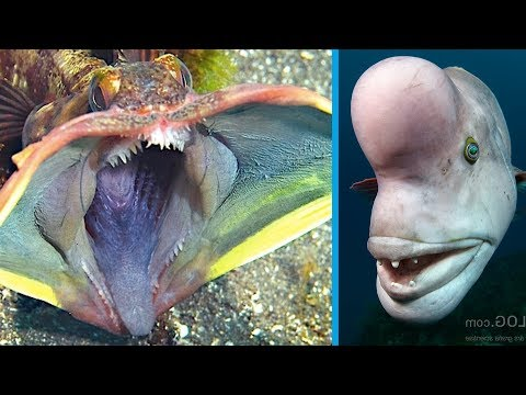 5 Strange Creatures Found In The Ocean