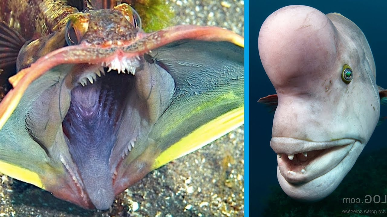 5 Strange Creatures Found In The Ocean Youtube