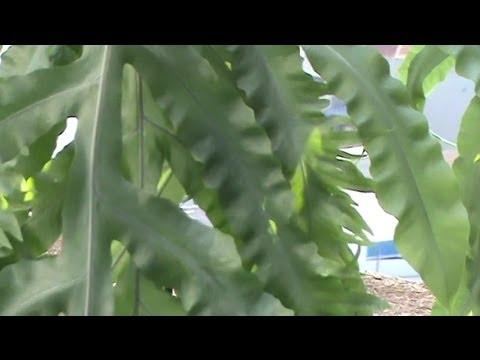 Helechos idea para decoraci n con hojas ornamentales for Hojas ornamentales