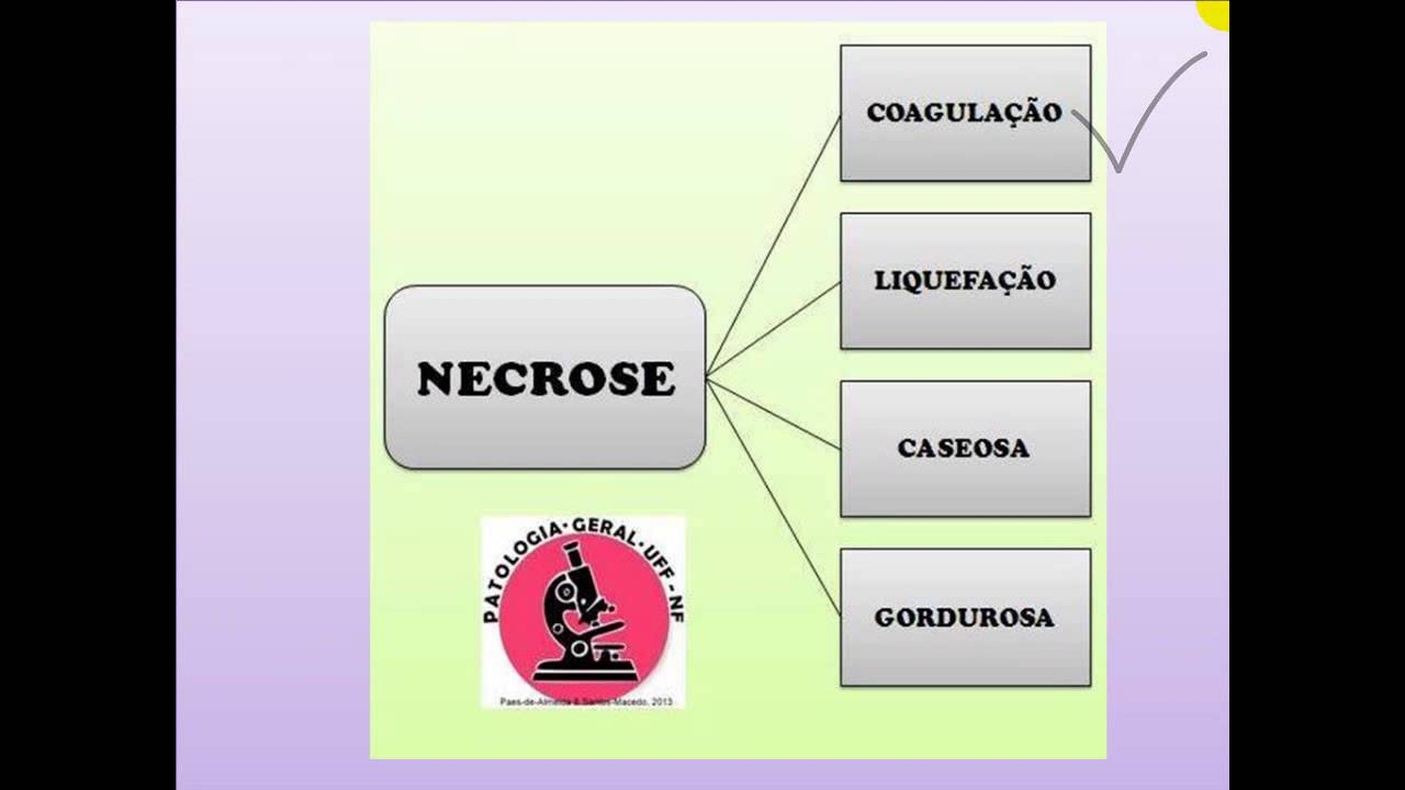 Lesao Celular Processos Patologicos - tecnoensaio