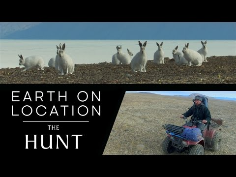 Filming Arctic Wolves and Hares | The Hunt | #EarthOnLocation Vlog | BBC Earth Unplugged