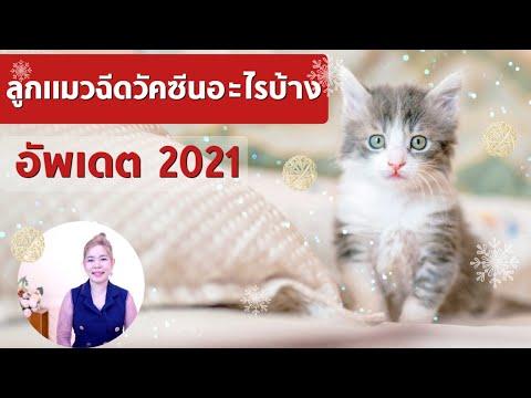 ลูกแมวฉีดวัคซีนอะไรบ้าง อัพเดต 2021