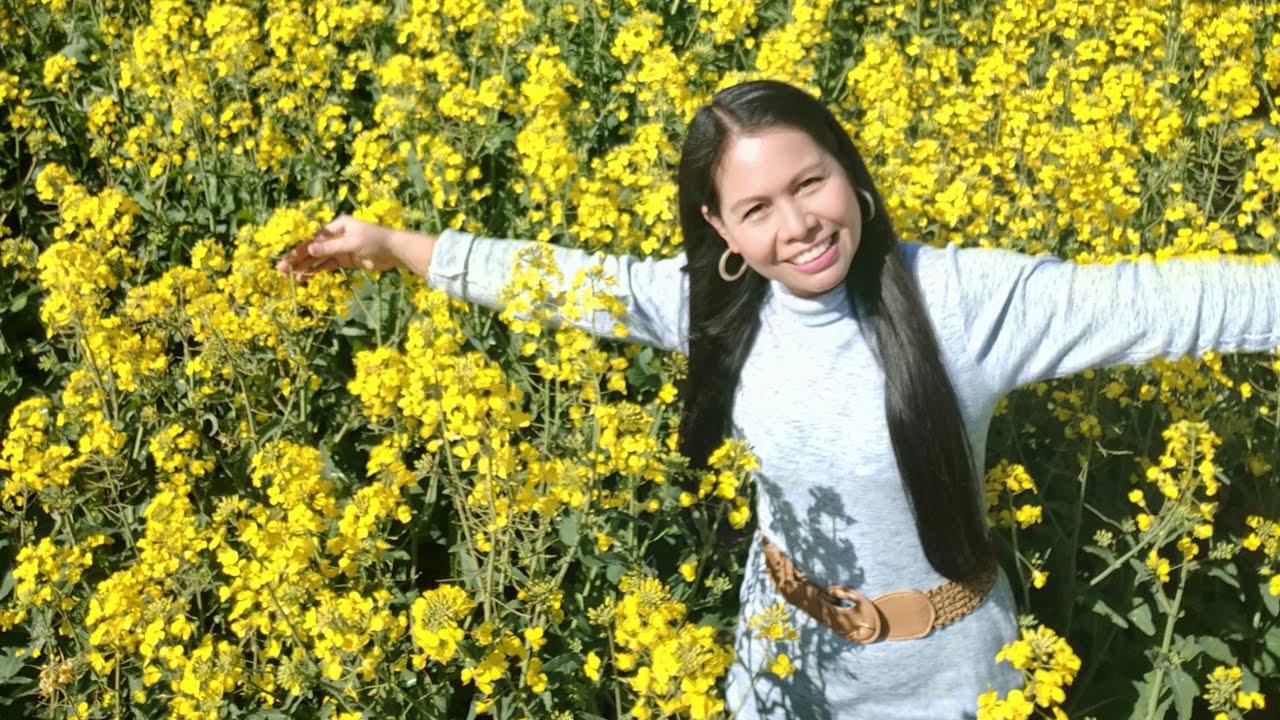 canola in Australiaฟาร์มออสเตรเลียทุ่งดอกคาโนล่า นำมาผลิตเป็นน้ำมันปรุงอาหาร