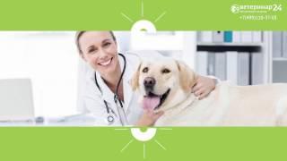 видео ветеринарная клиника в москве