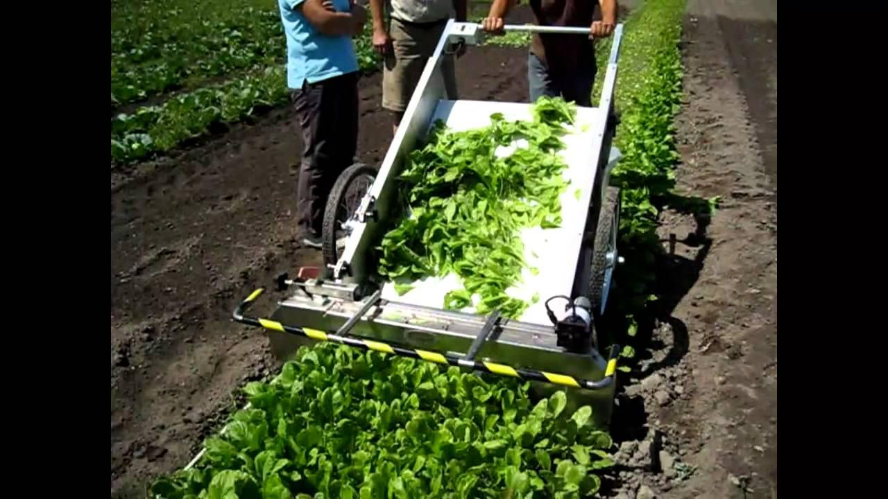 Greens Harvester - YouTube