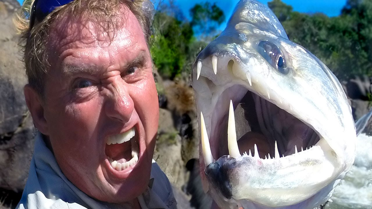 MONSTER VAMPIRE FISH YouTube