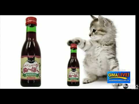Introducing Japanese 'Wine' For Cats VIDEO Never Drink Alone Again