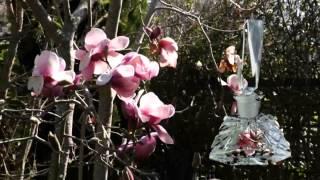 Spring Perfume Thumbnail