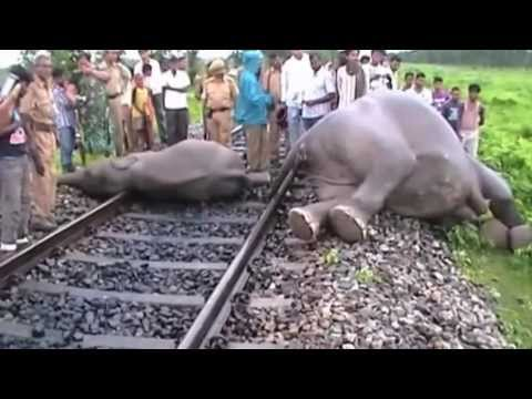 Elephants hit by speeding train in India