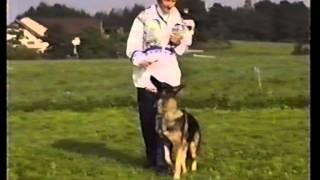 Как играть с собакой! ч.1