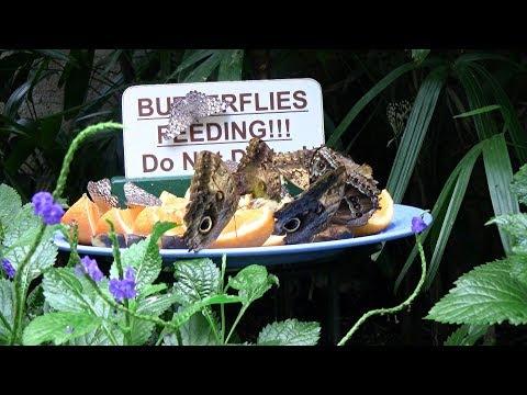 Niagara Parks Butterfly Conservatory - Canada, Ontario