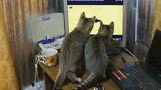 серебро  котики смотрят сериал