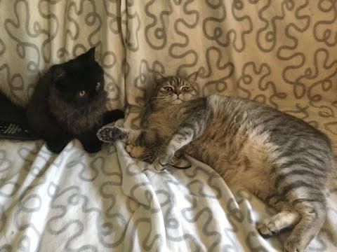 котов-дарти знакомства