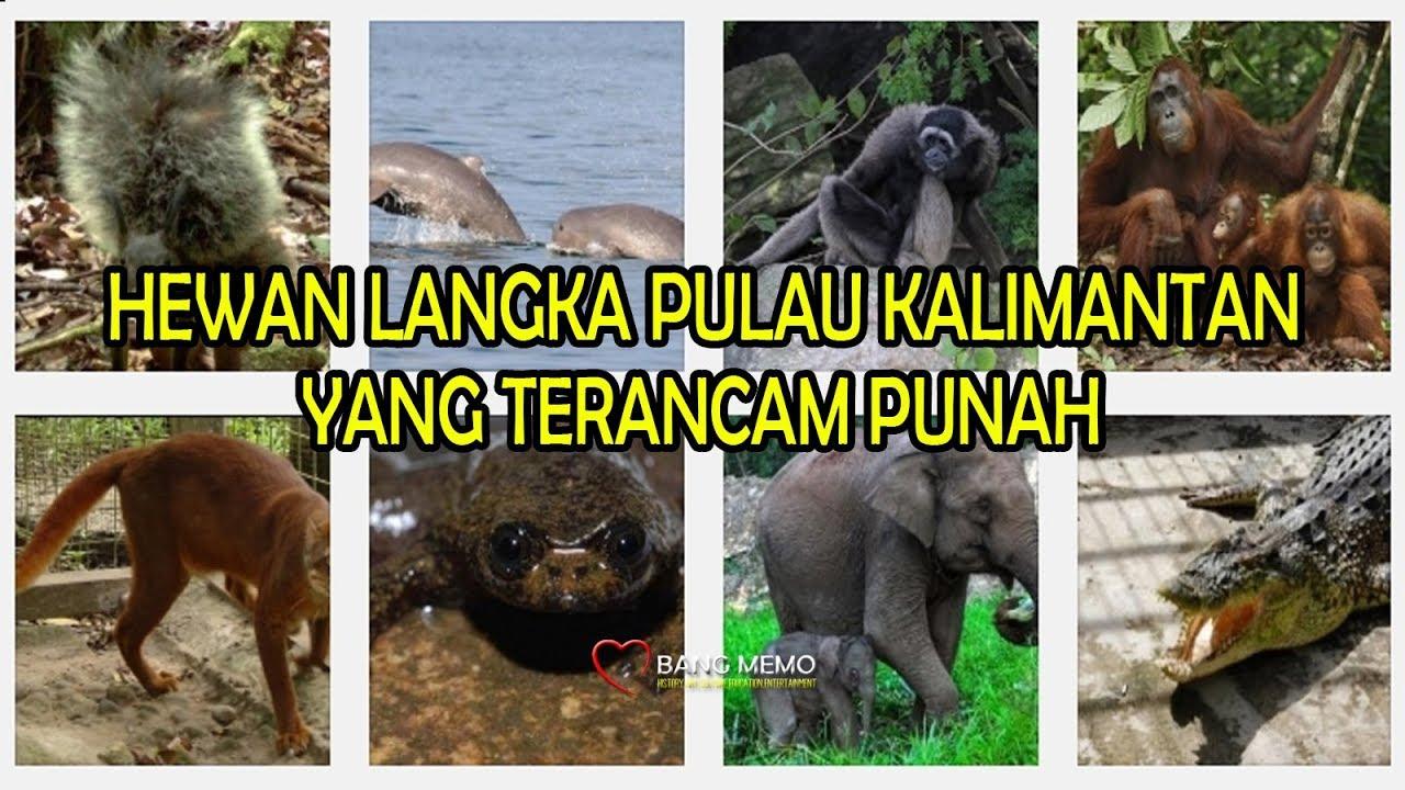 880+ Gambar Hewan Langka Di Kalimantan Gratis