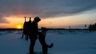 Воспитание и дрессировка охотничей собаки