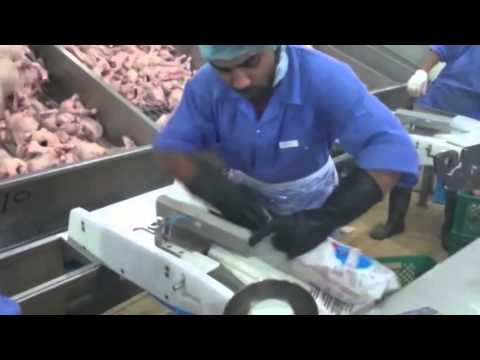 Poultry Processing: Semi-Automatic Bird Bagging Machine