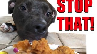 How to Get Your Dog to STOP STEALING Everything Right Now!