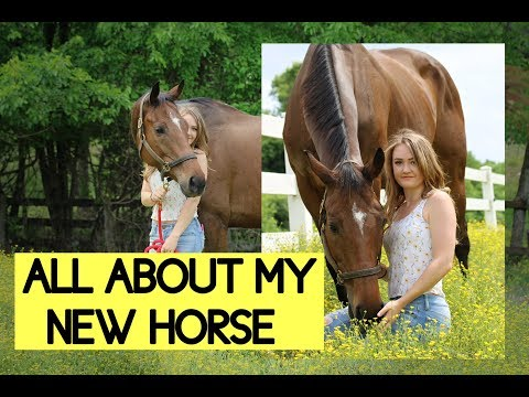 ALL ABOUT MY NEW HORSE