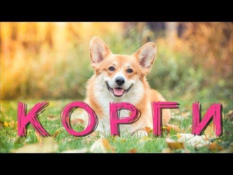 Вопрос: Какая порода у собаки на фото?