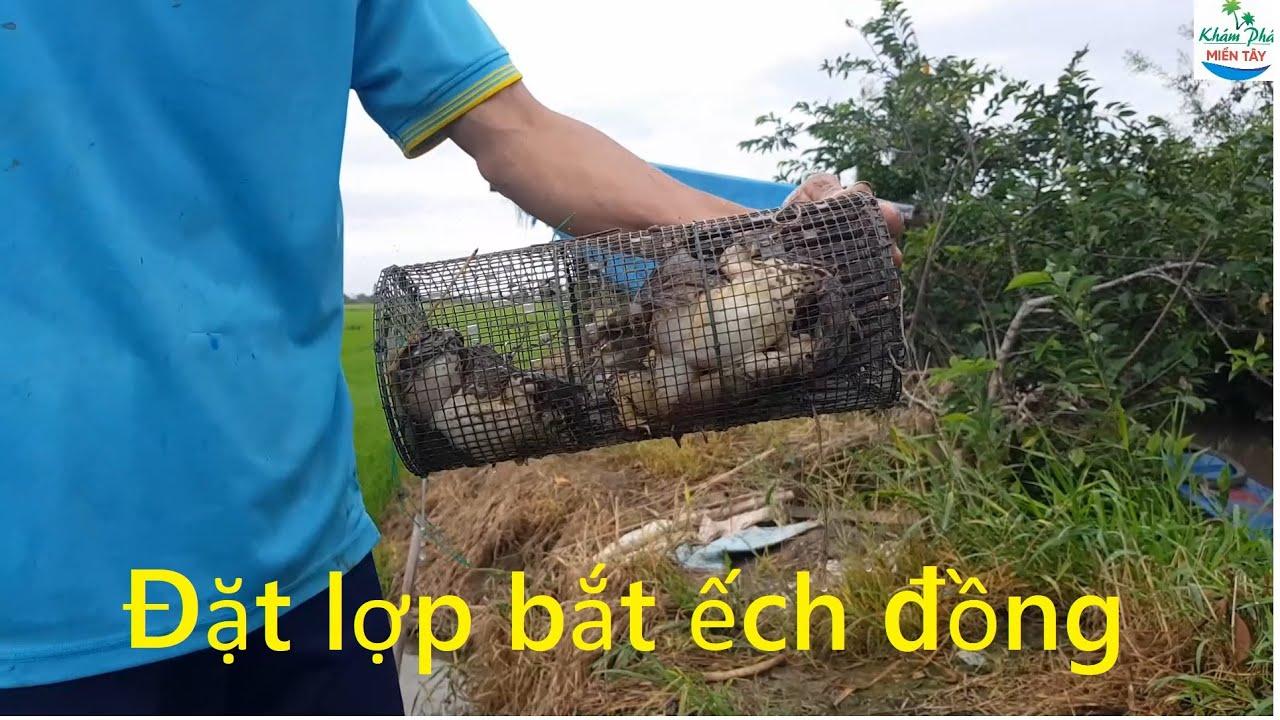 485   Thăm lợp ếch về dự trữ cho mùa dịch covid   a frog