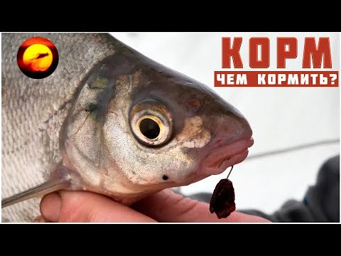 youtube рыбалка на леща зимой видео