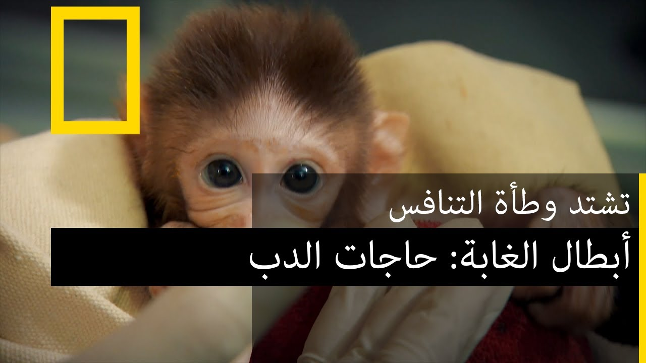 جمعية إنقاذ الحيوانات (أبطال الغابة): حاجات الدب | ناشونال جيوغرافيك أبوظبي