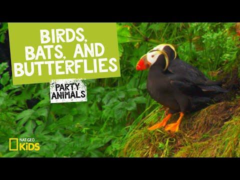 Birds, Bats, and Butterflies | Party Animals