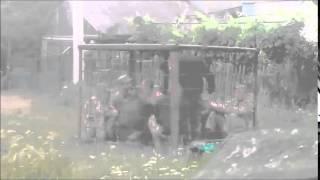 в мире животных,  ВСУ (музыка)