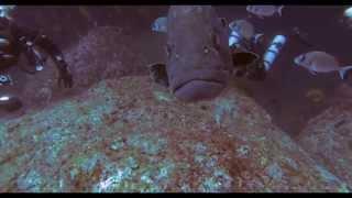 Любопытный групер. Испания, Коста Брава, сентябрь 2014(Очень любопытный групер! Он повстречался нам во время погружения на Исла Медес (Islands Medes) Коста Брава, Испани..., 2014-09-21T05:37:48.000Z)