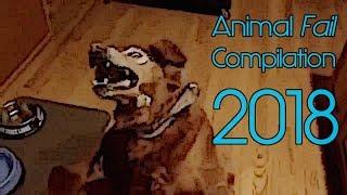 Animal Fail Compilation #1 Dog & Horse Edition 2018