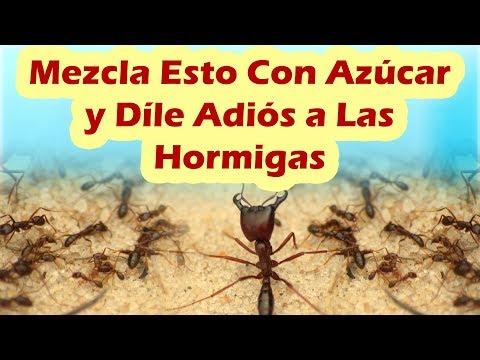 Mezcla Esto Con Azcar y Dile Adis a Las Hormigas COMO ELIMINAR HORMIGAS DE LA CASA RAPIDO