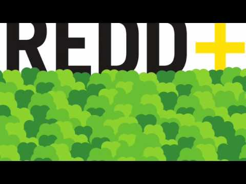 Introduction to REDD