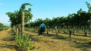 Access the Southern California Wine Country of Temecula in a Wheelchair