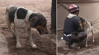 Щенок привёл спасателей туда, где под завалами была его семья