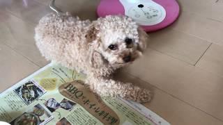 こんにちは!ちびです(*^^*)暑すぎてだれてます~(*´ω`*) 犬でもさっぱ...